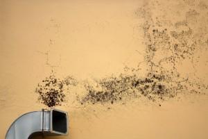 Plísně na stěně a vliv na zdraví